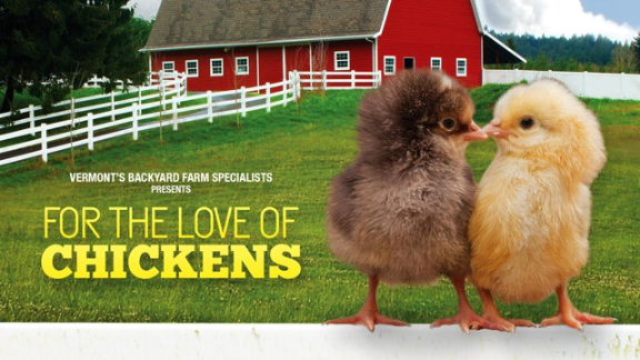 For the Love of Chickens - Guys Farms & Yard